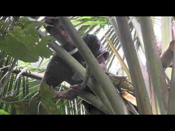 Видео обзор на Органический сахар из кокосовой пальмы 454 г