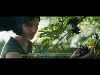 Видео обзор на Нэйчерс Вэй Sambucus Black Elderberry Original Lozenges 30 Loz...