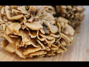 Видео обзор на Смесь из 7 видов грибов выращенных на органическом коричневом ...