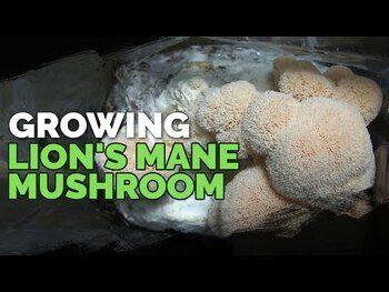Видео обзор на Host Defense Mushrooms Lion's Mane 120 Capsules
